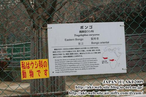 Tragelaphus euryceros01.jpg